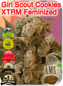AMS_Girl_Scout_Cookies_XTRM_Feminized