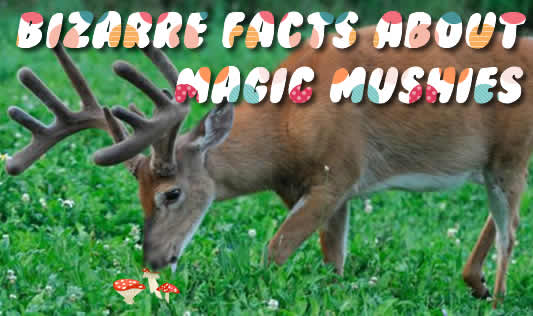 Bizarre facts about magic mushies