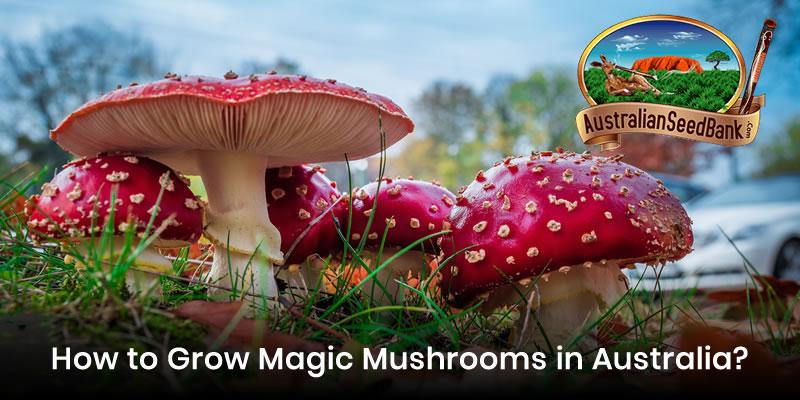 How to Grow Magic Mushrooms in Australia