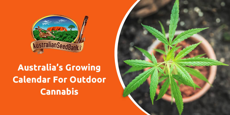 Australia's Growing Calendar For Outdoor Cannabis