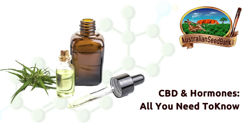 Our Articles CBD & Hormones: All You Need To Know