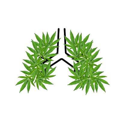 Cannabis Reduces Covid-19 Lung Damage