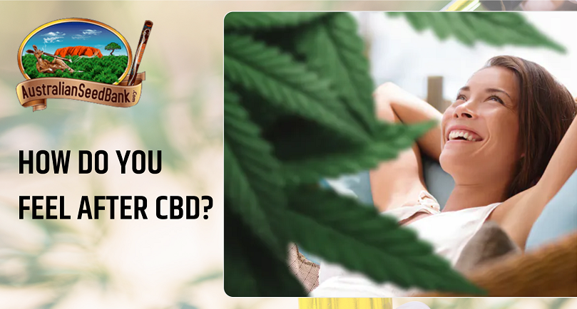 CBD Effects and Their Potential Benefits