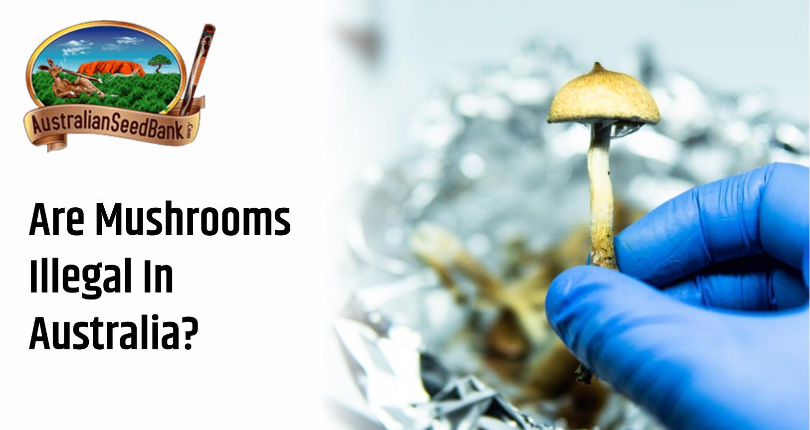 Magic mushrooms in Australia