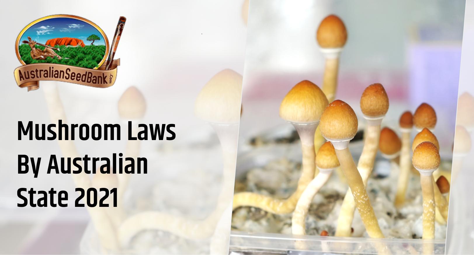 Mushroom laws by Australian State